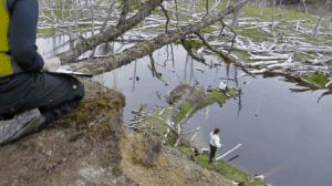 baeaver dam mapping