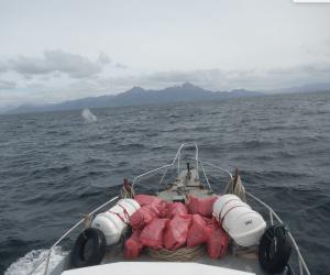 whale sound 3